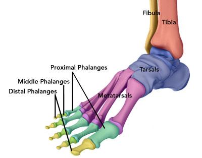 Ankle Injury Treatment Atlanta, GA   Ankle Arthroscopy Stockbridge