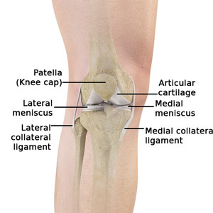 Knee Normal Anatomy